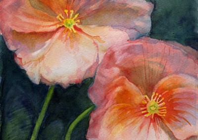 watercolor of poppies